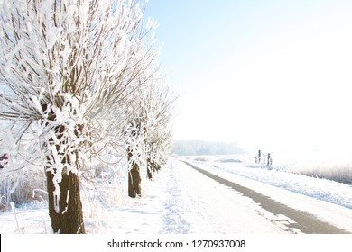 Landscape-treess with snow in a lane
