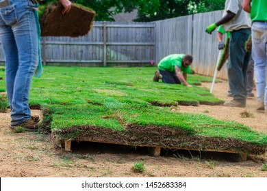 Landscaping crew laying new sod in a backyard