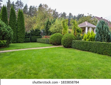 Landscaping of a garden with a bright green lawn, colorful shrubs, decorative evergreen plants and shaped boxwood (Buxus Sempervirens) in autumn. Gardening concept.