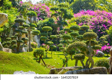 Landscaping. Topiary and bushes. A neatly trimmed and well-kept garden. Blooming park for relaxation. Spa background. Japanese garden.