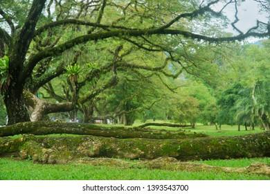 The Landskap view at the old tree