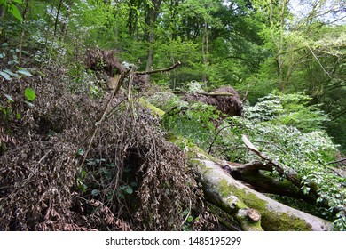 landslide with trees and stones