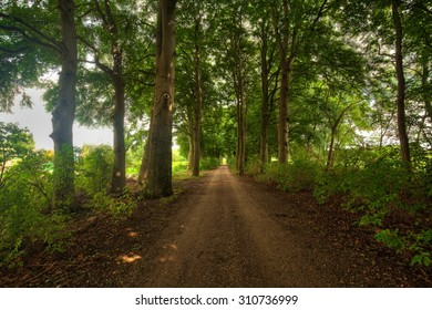 Lane with beech trees
