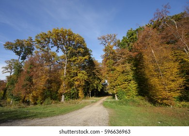 Lane in forest of Compiegne, France