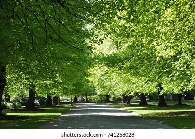 Lane in Hagley Park in Christchurch, New Zealand