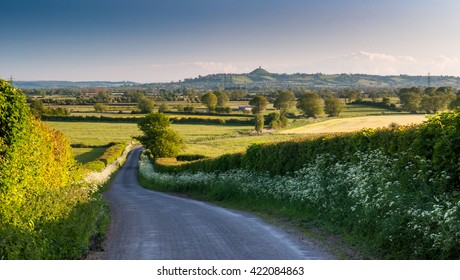 A lane lined with spring verge flowers leads down to the Somerset Levels, with Glastonbury Tor beyond.