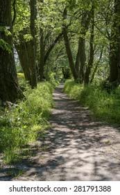 A lane in the park, Poland.