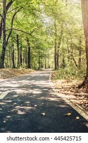 Lane running through the forest in summer