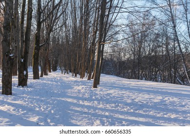 A lane in the winter forest in the morning