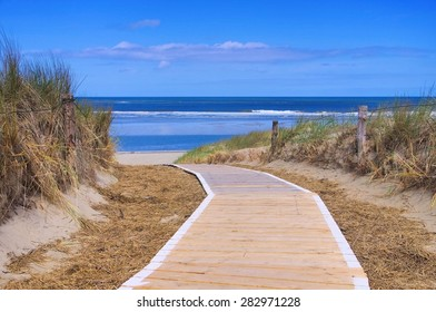 Langeoog dune and track