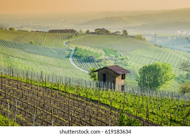 Langhe hills and vineyards in spring