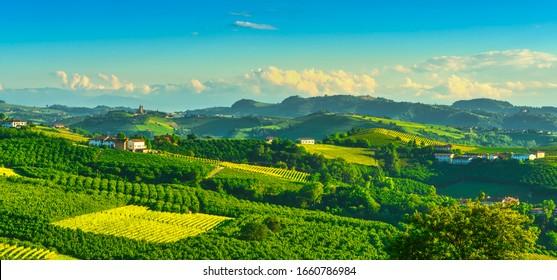 Langhe vineyards and hazel tree cultivation, Serralunga d Alba, Unesco Site, Piedmont, Northern Italy Europe.