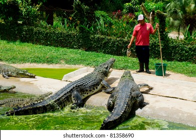LANGKAWI-JULY 13:Unidentified Man feeds a crocodile at Langkawi Crocodile Farm on July 13,2011 in Langkawi, Malaysia. The Crocodile farm is registered with CITES and home to more than 1000 crocodiles.