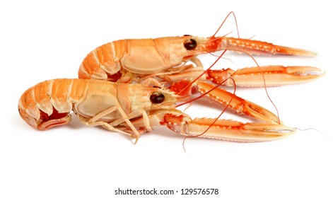 Langoustine isolated on white