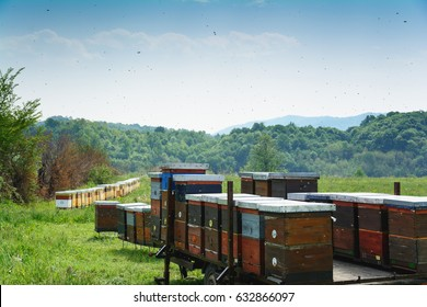 Langstroth beehives mounted on a single axle utility trailer standing in a field of grass. Beehives set on iron stands, and mountain forests are visible in the blurry background. Selective focus.