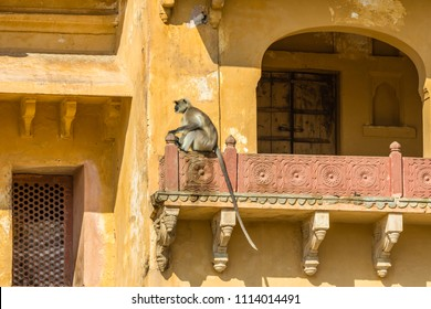 A Langur monket on a roof at Amber Fort in Rajasthan, India.