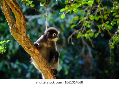 langur monkey wildlife sitting in a tree