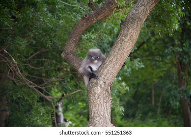 The langurs on the tree