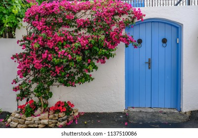 Lania, Cyprus, May 13, 2018:  Closed blue wooden doors with beautiful pink bourgainvilliea plant set against a white wall.