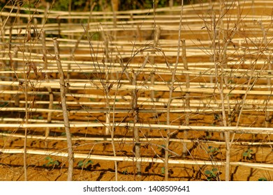 Bamboo Fencing Images, Stock Photos & Vectors | Shutterstock