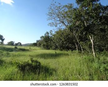 lanscape with florest