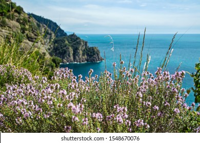 lanscape of riviera coast, turquiose water, flowers and blue sky. Liguria, Italy