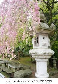 Lantern and flowers of Enryakuji Temple