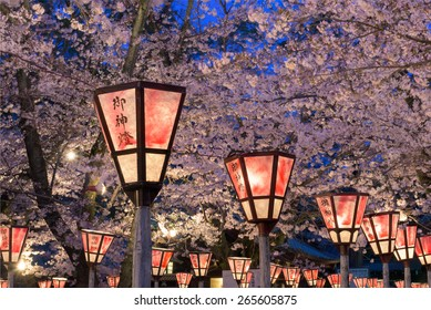 "Lantern in Sakura Festival at Mishima Shrine, Shizuoka, Japan. The lantern reads ""The light of God"""
