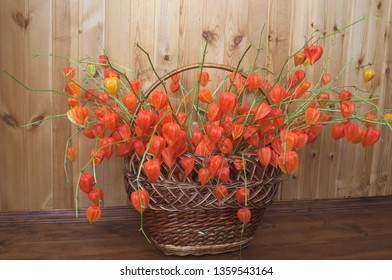Сhinese lanterns in a basket. Bouquet of chinese lanterns (Physalis alkekengi) in the wicker basket. Red husk of the fruits resembles paper lanterns