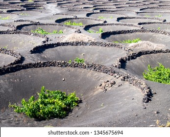 Lanzarote, Spain: Cultivation of vineyards on the ground