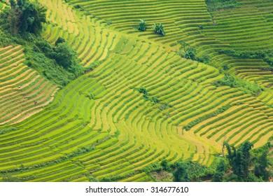 Laocai Vietnam september 6 2015 Vietnam Paddy fields, terraced culture, Sapa, Vietnam