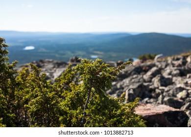Lapland, Finland in summer