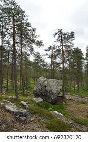Lapland forest with big stone, Könkäänvaara