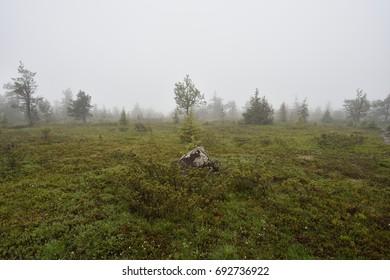 Lapland landscape in the mist, Pallastunturi, Mustakero