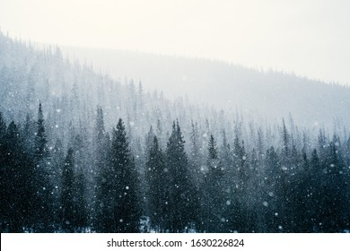 A lapse in an intense blizzard outlines the layers of trees at Rocky Mountain National Park in Colorado.
