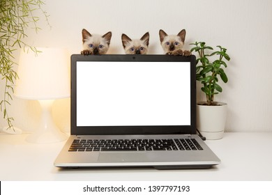 Laptop with blank screen on white table with kittins. Cut cats in home interior. Pats on office background. Ð¡oncept on help and technical support