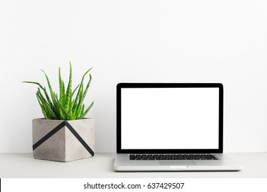 Laptop computer and a plant on a desk.