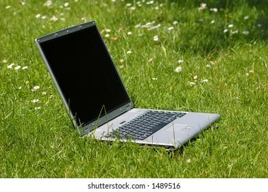 laptop on green grass