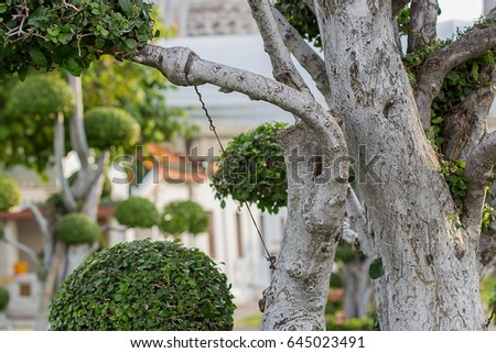Groovy Larch Bonsai Tree Branches Wires Shaping Stock Photo Edit Now Wiring 101 Capemaxxcnl