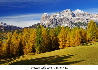 Larch forest in fall colours and The Tofane Group in the Dolomites, Italy, Europe