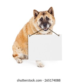 A large Akita breed dog sitting and holding a blank white sign from his mouth. Enter your own message.