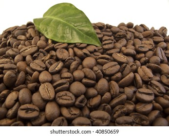 Large Amount of Coffee Beans shot with a Coffee Leaf