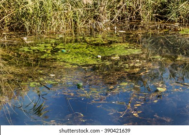 a large amount of debris and dirty waste water caused the rapid growth of algae in the lake. Water pollution. Ecological problem