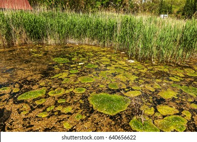 large amount of garbage and dirty sewage caused a rapid growth of algae in the lake. Water pollution. Ecological problem. Technological catastrophe. Dead nature. Dirty lake