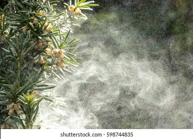 Large amount of pollen tree