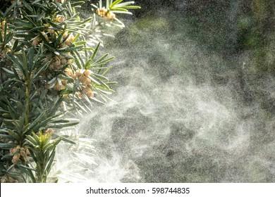 große Menge Pollenbaum