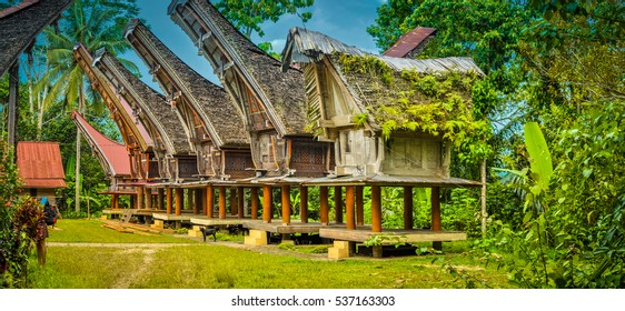 Large ancestral houses standing on four pillars with large boat-shaped roofs in Sangalla, Toraja region in southern Sulawesi, Indonesia.