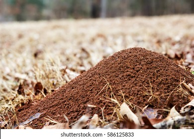Large ant hill in a field of brown grass