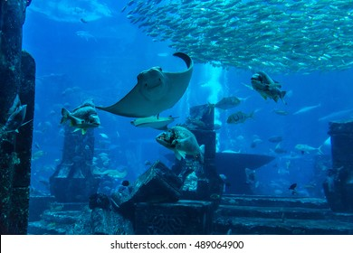 Large aquarium in Dubai, United Arab Emirates