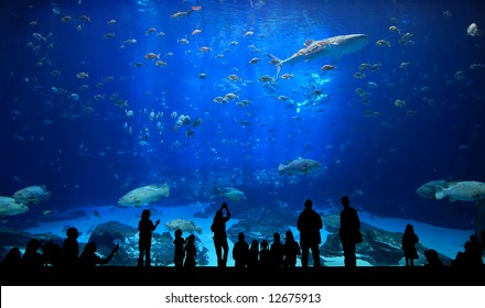 Large Aquarium - People Silhouette looking at the amazing fish